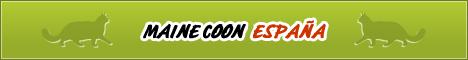 Maine Coon España