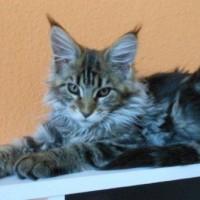 of Moonlight Cats Bertha