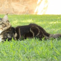 Rommel Vitorones en el jardin