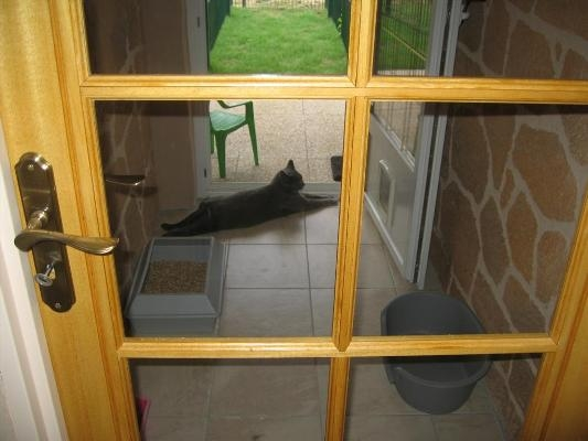 Residencia Para Gatos Cuidados Y Belleza Foro Gatos Maine Coon